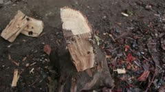 Wood chopping (watch till the end) Stock Footage
