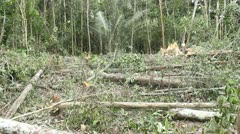 Tropical rainforest felled for slash and burn agriculture Stock Footage