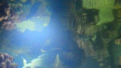 sharks - stock footage