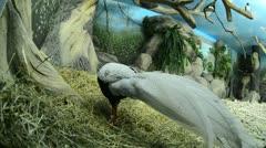 Birds Stock Footage
