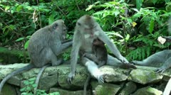 Monkeyforest Stock Footage