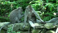 Stock Video Footage of Monkeyforest