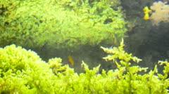 Seaweed Stock Footage