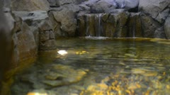 freshwater - stock footage