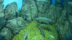Farm fishes Stock Footage