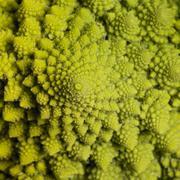 Abstract romanesco cauliflower Stock Photos