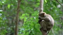 Monkey in Erawan National Park Kanchanaburi province. Stock Footage