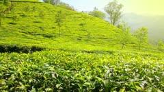 mountain tea plantation in Munnar Kerala India - stock footage