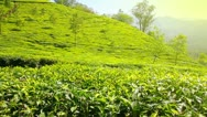 Stock Video Footage of mountain tea plantation in Munnar Kerala India