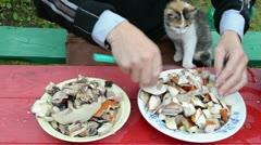 Man cut orange cap mushrooms and cat sit on knees. Stock Footage