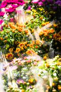 Flower shop arrangement outside a shop in paris Stock Photos