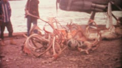 Dead Elk And Deer From Arctic Hunting Trip-1969 Vintage 8mm film - stock footage