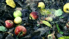 Rain falling on apples lying on the ground, slow motion shot at 480fps Stock Footage