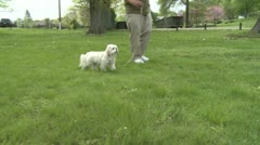 Man's best friend (2 of 3) Stock Footage