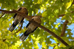 Sleeping birds Stock Photos