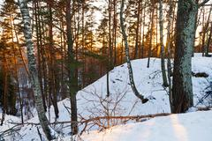 snowy hill in winter forest - stock photo