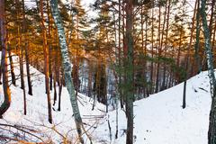 snowy ravine in winter forest - stock photo