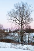 Birch in country winter landscape Stock Photos