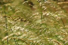 Summer grasses - stock photo