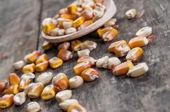 Yellow corn kernels Stock Photos