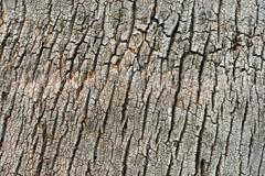 Stock Photo of Tree bark
