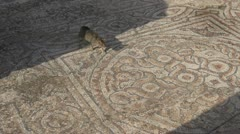 History & culture, Ephesus ruins, cat crosses mosaic tile flooor Stock Footage
