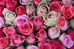 Pink wedding roses Stock Photos