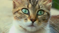 A cat with green eyes looks around. Stock Footage