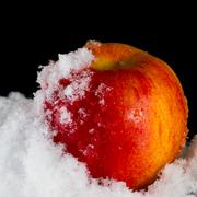 Stock Photo of red apple in the snow