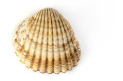 clams shells - stock photo