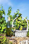Stock Photo of harvest and wine