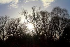Dead Trees Against Cloudy, Sunny Sky Stock Photos