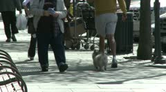 Walk down a village street (1 of 6) Stock Footage