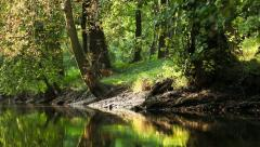 Man running in forest along the water in sunshine Stock Footage