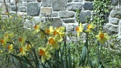 Flowers along a stone wall (3 of 3) Stock Footage