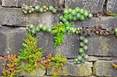 garden wall - stock photo