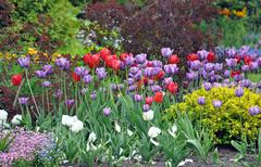 Colorful spring tulip garden Stock Photos
