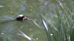 Small turtle enjoying the water (1 of 6) Stock Footage