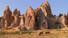 Stock Video Footage of Cows graze in front of bizarre geological formations at Cappadocia, Turkey.