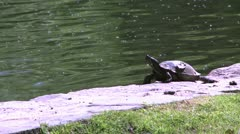 Small turtle enjoying the water (2 of 6) Stock Footage