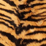 stripes on a tiger pelt - stock photo