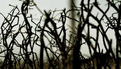 Dead Tree Branches - Close Up, Winter - stock photo