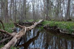 Fallen tree trunk Stock Photos
