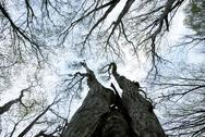 Trees to the sky Stock Photos
