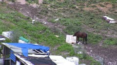 Horse drinks in poor neighborhood Stock Footage