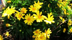 Flowers 02 HD - stock footage
