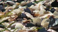 Close up of seashells that shine Stock Footage