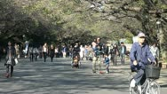 Beautiful Ueno park on a sunny afternoon in autumn, Tokyo, Japan Stock Footage