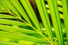 Abstract macro of tropical leaf Stock Photos