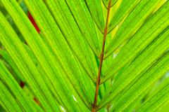 abstract macro of tropical leaf - stock photo